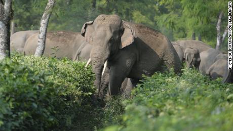 Rezolvați conflictul mortal din India dintre oameni și elefanți